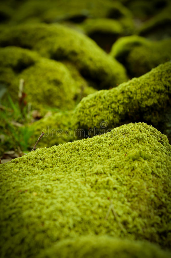 Mossiga stenar arkivbild