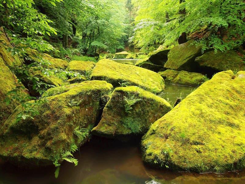 Mossiga stenblock i vatten under nya gröna träd på bergfloden royaltyfri foto