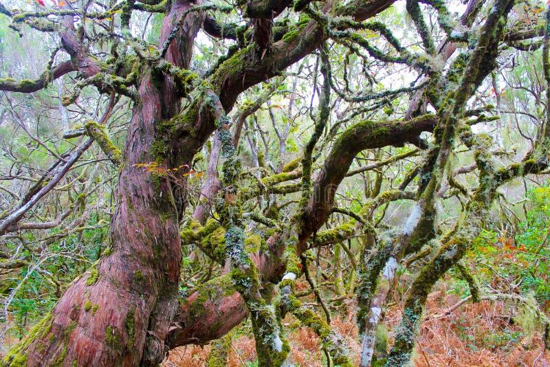 Mossiga träd arkivbilder