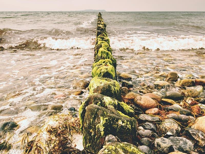 Mossiga vågbrytarepoler i skummande vatten av havet Intelligensalger för sandig strand, fotografering för bildbyråer