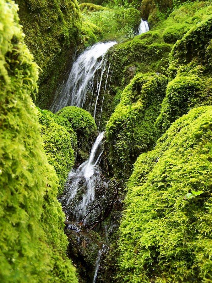 Mossiga vattenfall från Oregon arkivfoton