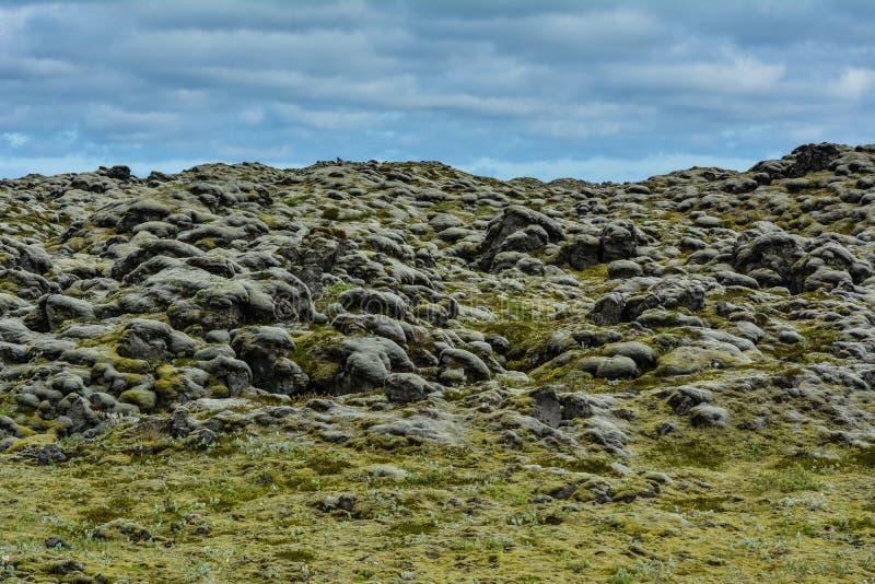 Mossigt lavastenfält i Island på en sommardag arkivfoto