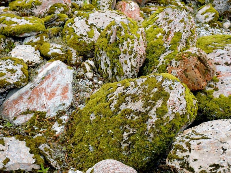 Mossigt vaggar den Franz Josef dalen royaltyfria foton