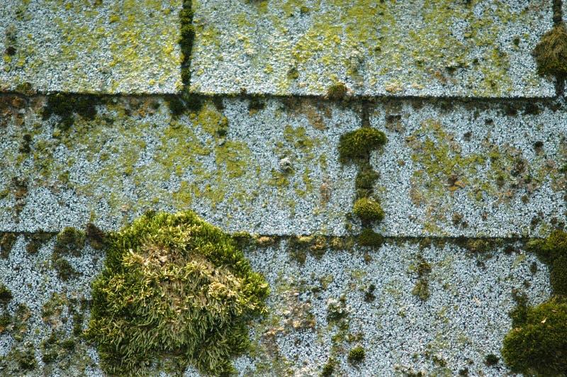 Mossshingles Arkivfoto