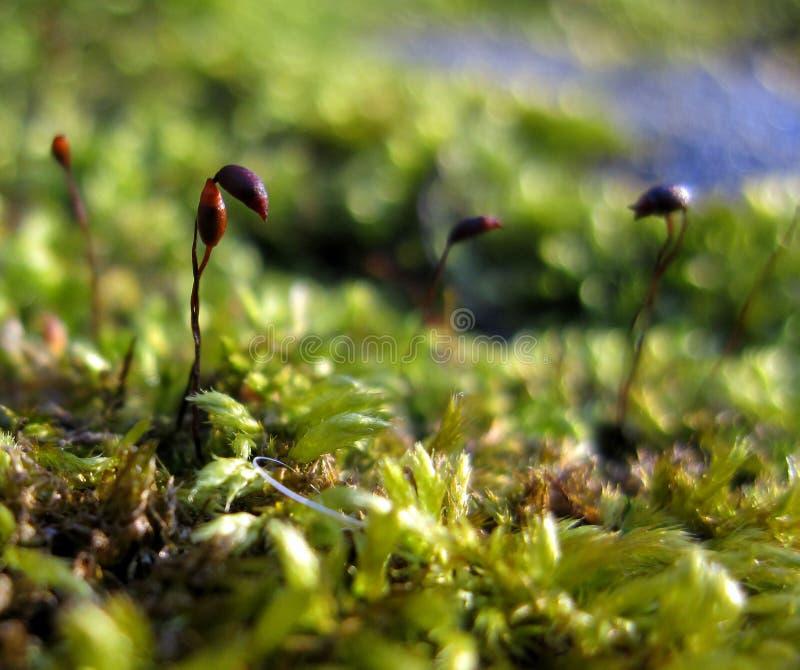 Mosssprouts zdjęcia royalty free