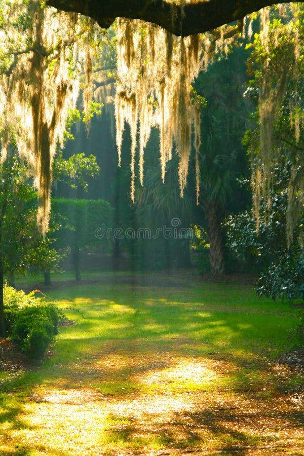 Mosstree1 fotos de stock