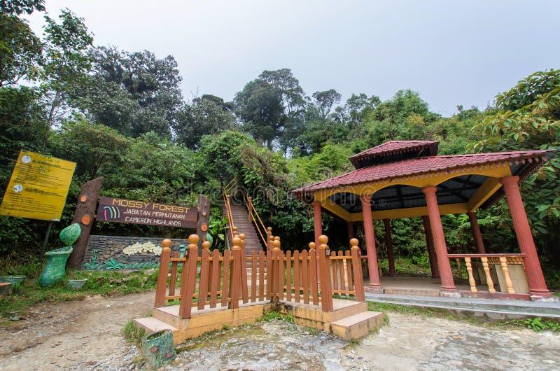 Mossy δάσος Gunung Brinchang, Χάιλαντς Μαλαισία του Cameron στοκ εικόνα με δικαίωμα ελεύθερης χρήσης
