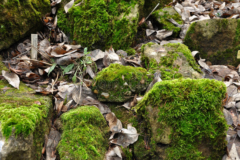 mossy βράχοι στοκ φωτογραφίες