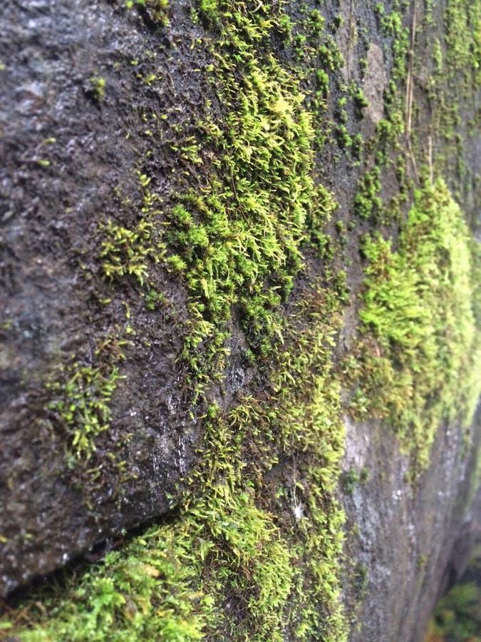 mossy βράχος στοκ εικόνα με δικαίωμα ελεύθερης χρήσης