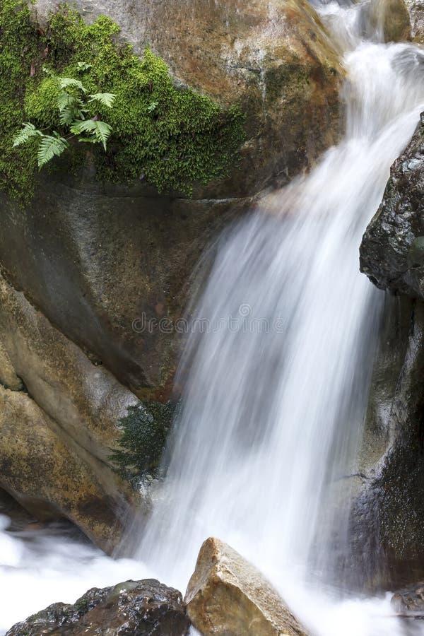 mossy βράχος στοκ εικόνες