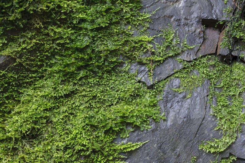 mossy βράχος στοκ φωτογραφίες με δικαίωμα ελεύθερης χρήσης