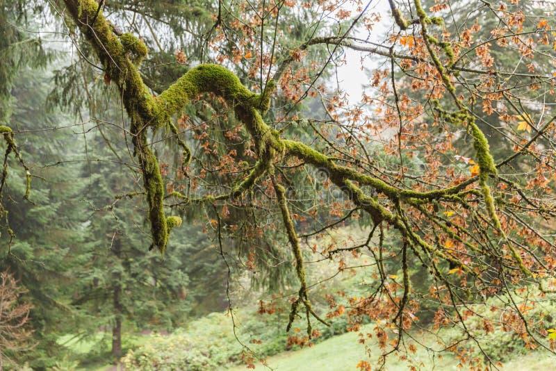 Mossy κλάδοι δέντρων το φθινόπωρο στοκ φωτογραφία με δικαίωμα ελεύθερης χρήσης