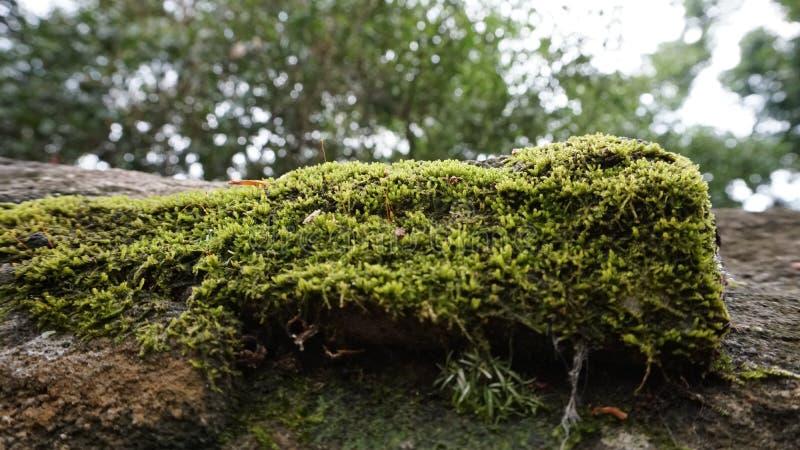 mossy στοκ φωτογραφία