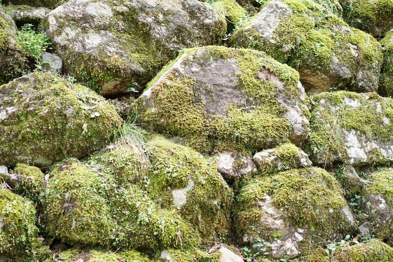 Mossy πέτρα στοκ εικόνες