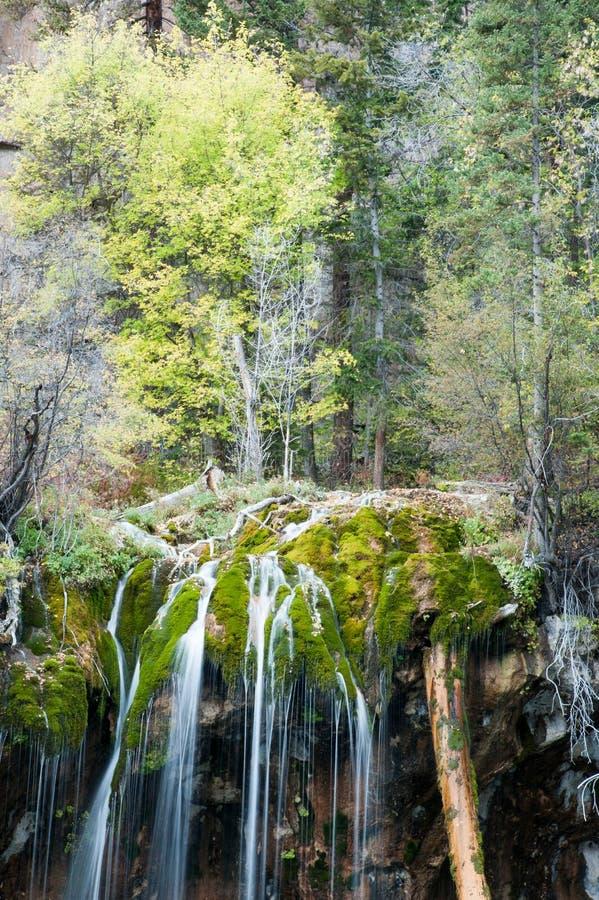 Mossy πτώση νερού στοκ εικόνα