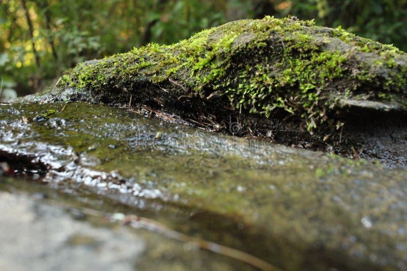 Mossy υγρός βράχος στοκ εικόνα με δικαίωμα ελεύθερης χρήσης