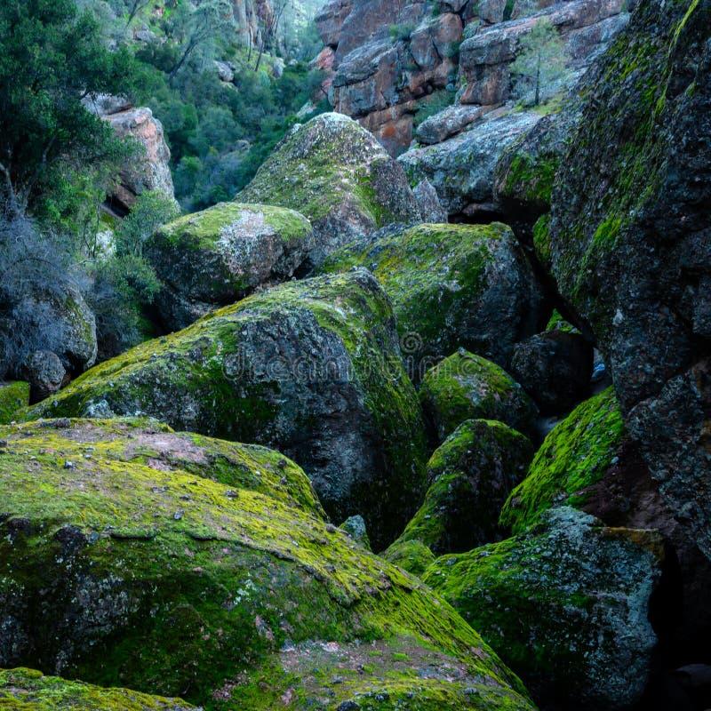 Mossy Boulders Clog Canyon fotografia de stock