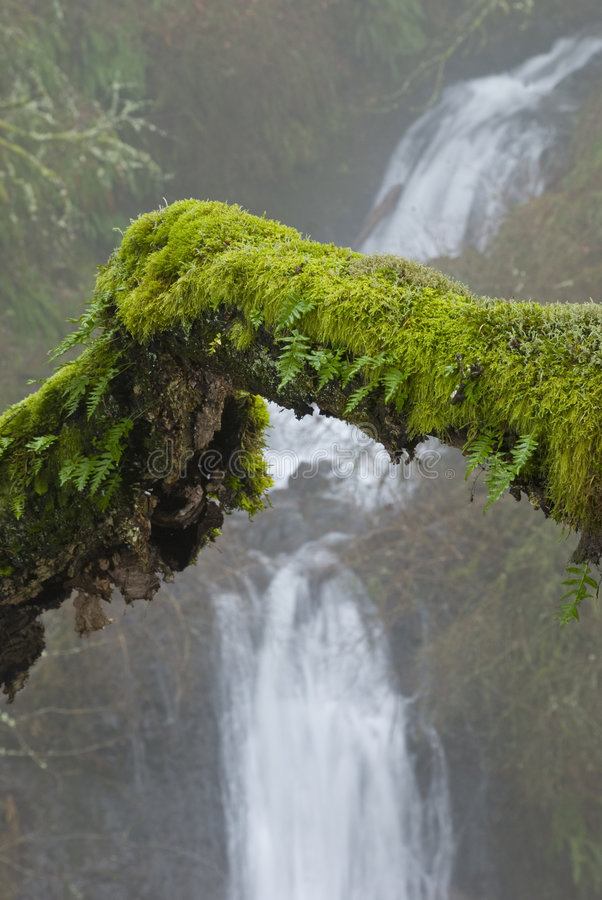 Mossy branch and waterfall stock images