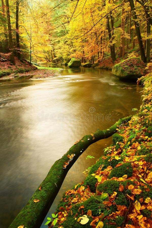 Mossy broken trunk of aspen tree fallen into mountain river. Orange and yellow maple leaves,, clear water makes mirror. stock photos