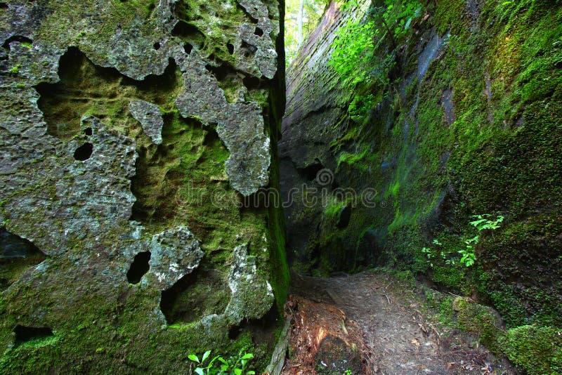 Mossy canyon in Alabama stock photos