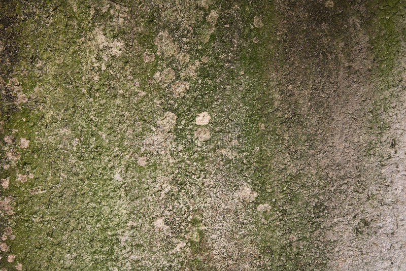Download Mossy Cement Background Royalty Free Stock Image - Image: 2311146