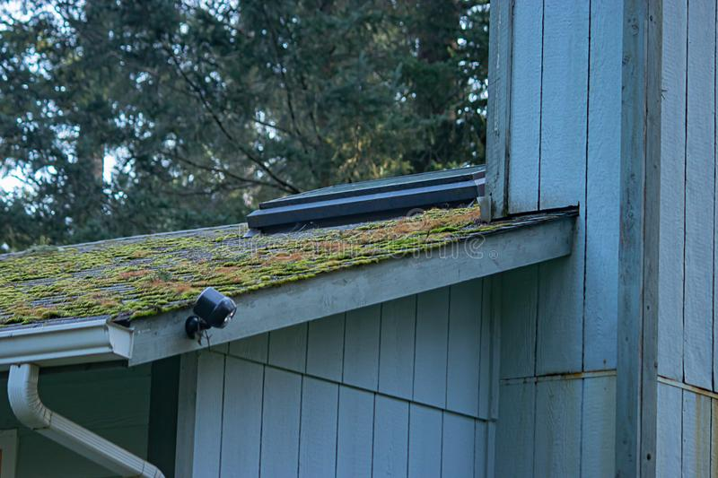 Mossy green growth on roof line of old blue house. Mossy green growth on roof line of old house in washington state royalty free stock photos