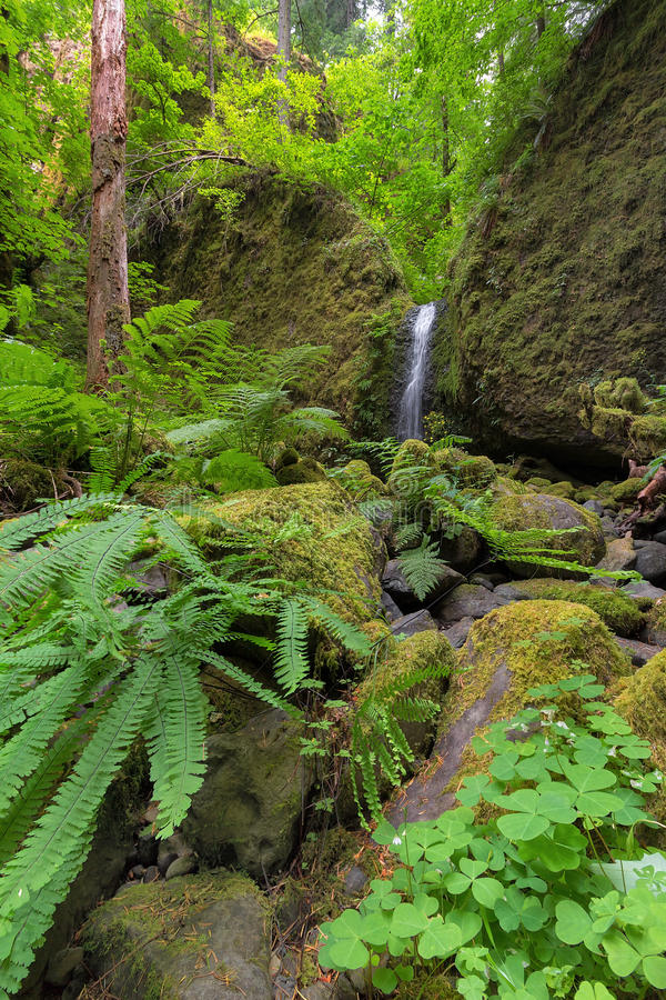 Mossy Grotto Falls with Plants in Spring Season. Mossy Grotto Falls with Green Plants in Columbia River Gorge National Scenic Area Oregon in Spring Season stock photo