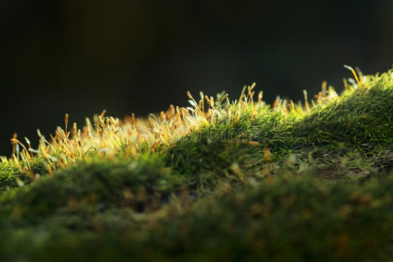 Mossy hillock on forest floor royalty free stock photos