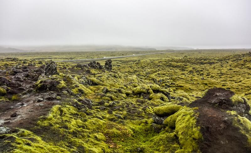 Mossy lava rocks Iceland royalty free stock photos