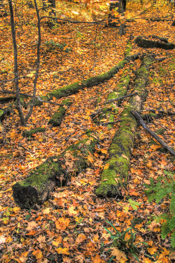 Mossy Log In HDR Royalty Free Stock Image