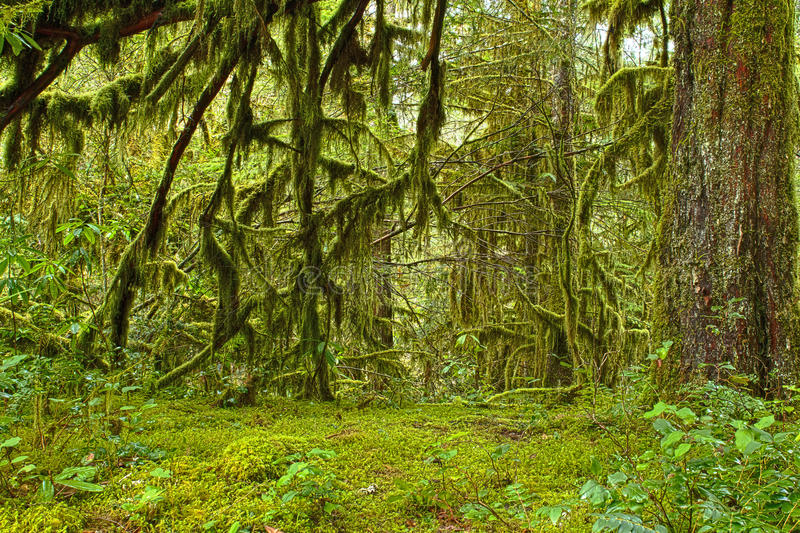 Download Mossy Oak Forest Haven HDR stock photo. Image of image - 23367528