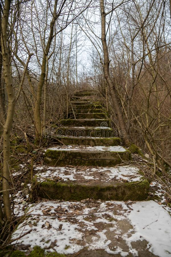 Mossy outside stone stairs overgrown with bare-branched bushes and trees stock image