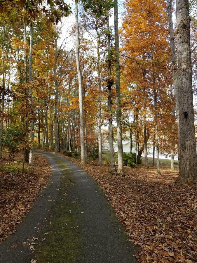 Mossy pavimentou ao lado do lago no outono de alto risco fotos de stock