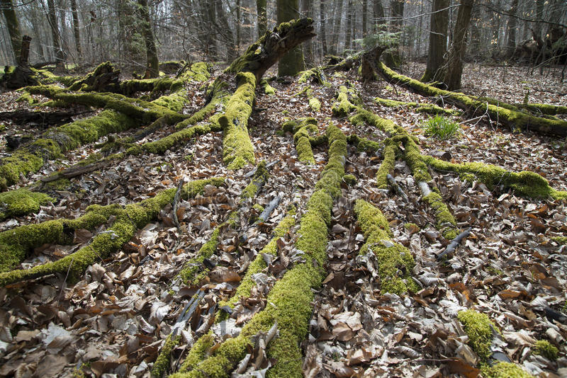 Mossy protective forest stock photo