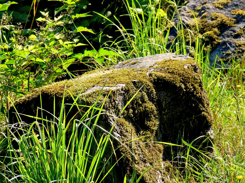 Mossy Rock royalty free stock images