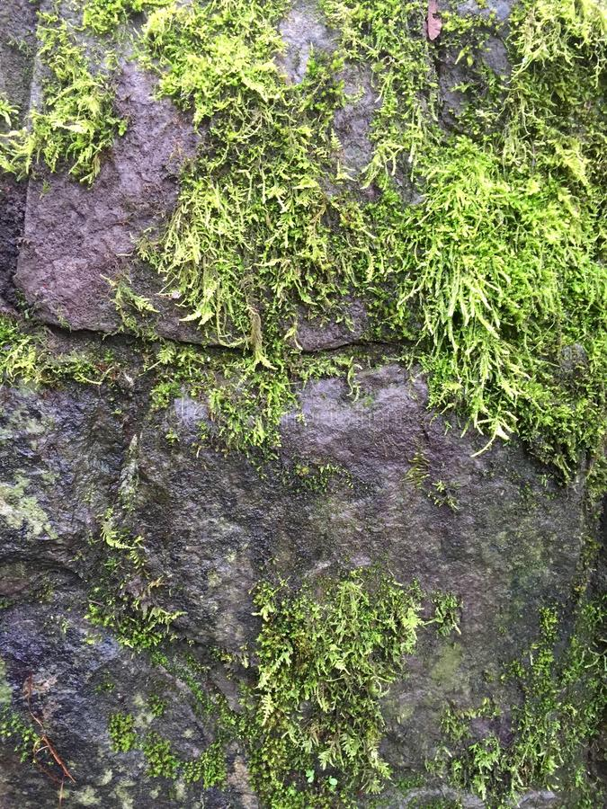Mossy rock stock photography