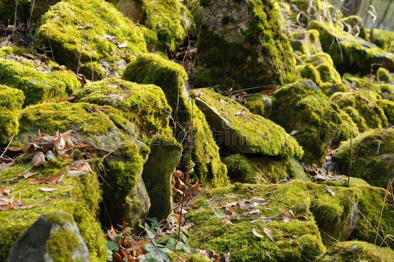 mossy rocks royaltyfri foto