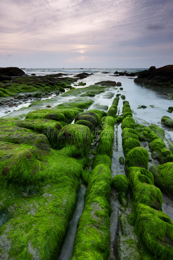 Mossy rocks at a beach in Kudat, Sabah, East Malaysia royalty free stock photos