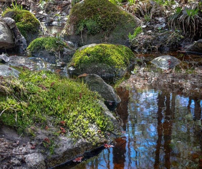 Mossy Rocks In Pring Creek Forest Reflected stock photos