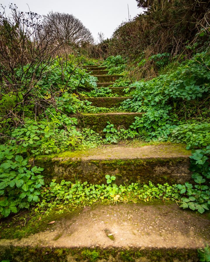 Mossy staircase on a Bray Head hiking trail. Moss covered and overgrown stairs found on a hiking trail Bray Head, County Wicklow, Ireland royalty free stock photography