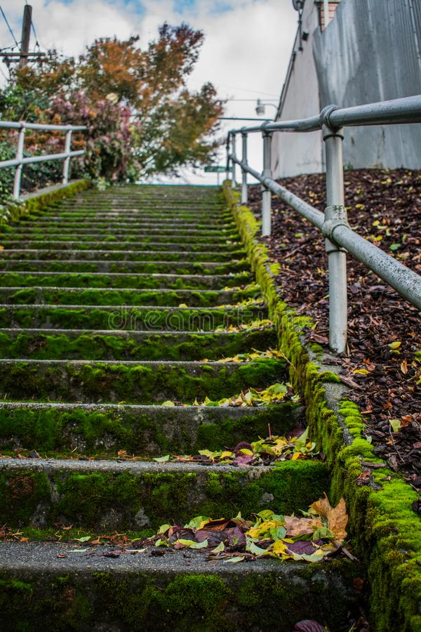 Mossy Staircase in the City stock photos