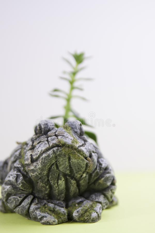Mossy Stone frog statue with out of focus cactus stock images