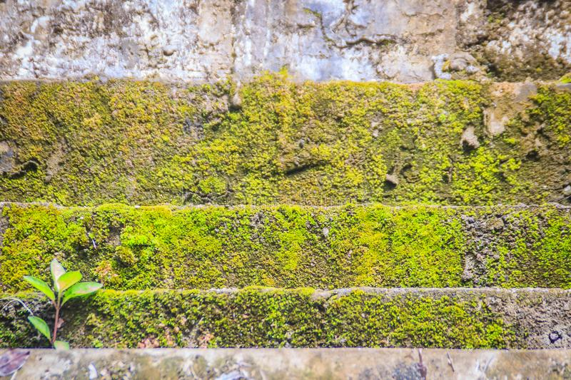 Mossy stone stairs step up with small green tree. Stones path covered by green moss in the forest. Old Mossy staircase with growin stock photography