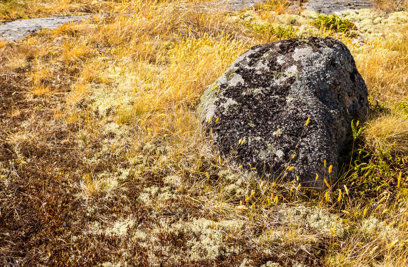 Download Mossy Stone In Yellow Grass Royalty Free Stock Images - Image: 33553489