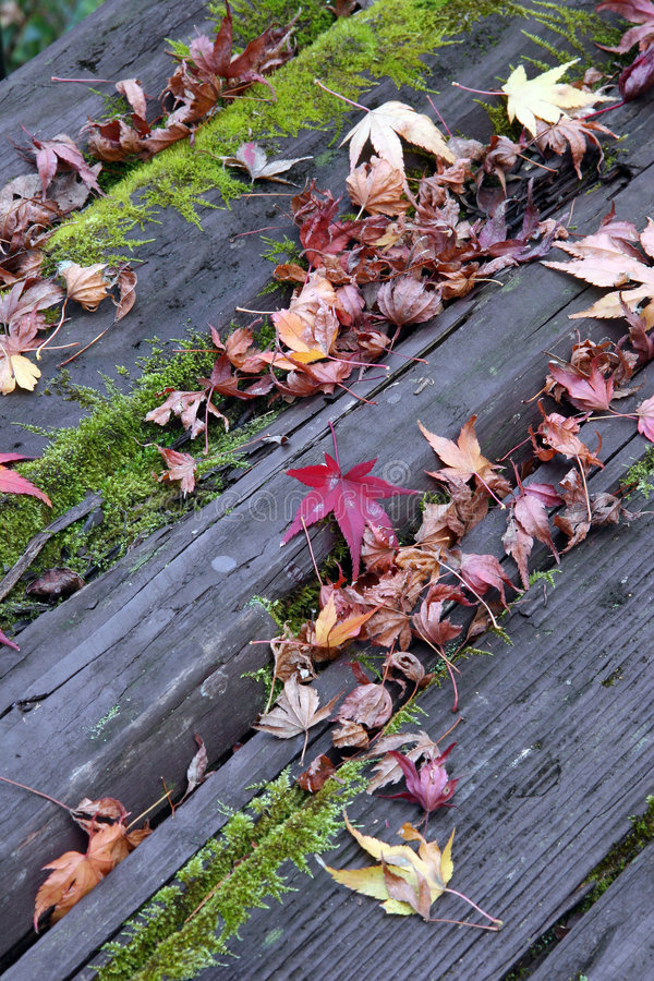 Download Mossy Table stock image. Image of colorful, wooden, color - 50805