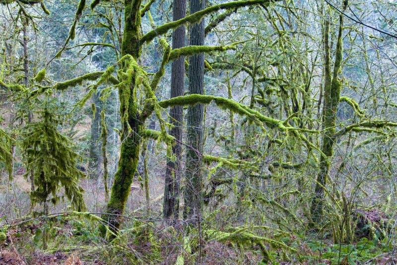 mossy trän arkivbilder
