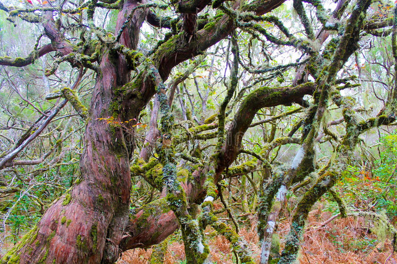 Mossy trees stock images