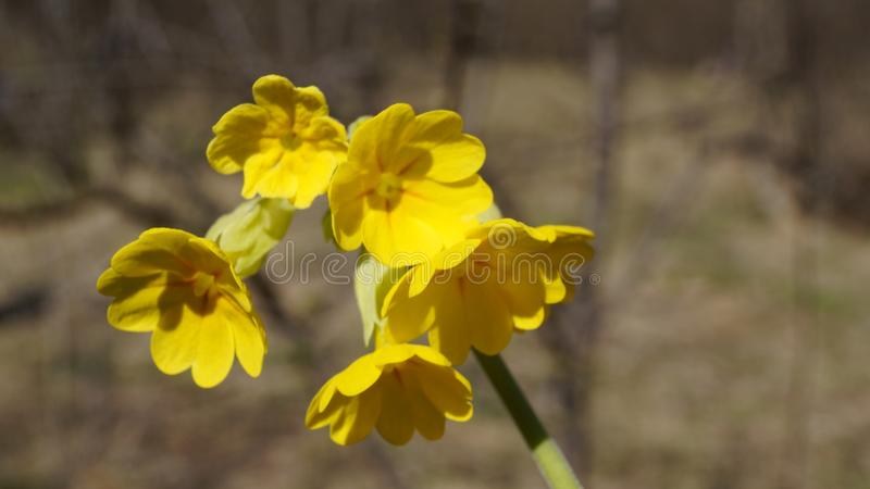 Mountain beautiful flower royalty free stock images