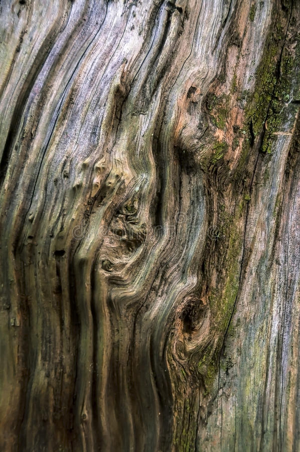 Texture of a wooden trunk royalty free stock photos