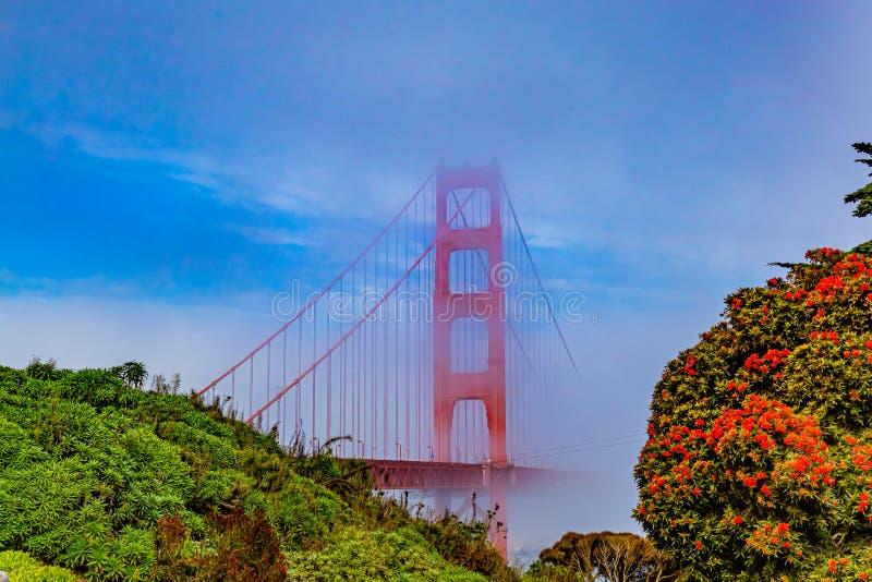 Most Golden gate w San Francisco prawie całkowicie pokryty mgłą fotografia royalty free